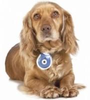Pet's eye view una fotocamera per animali