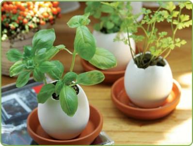 Uovo Pianta Eggling