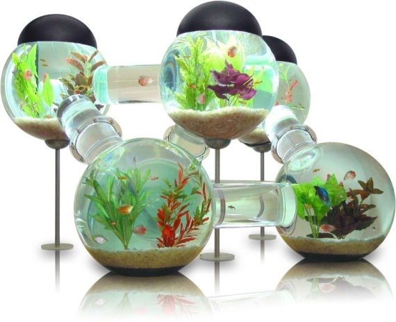 Un acquario labirinto per pesciolini