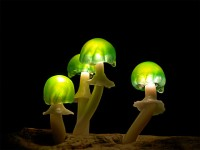 funghi lampade