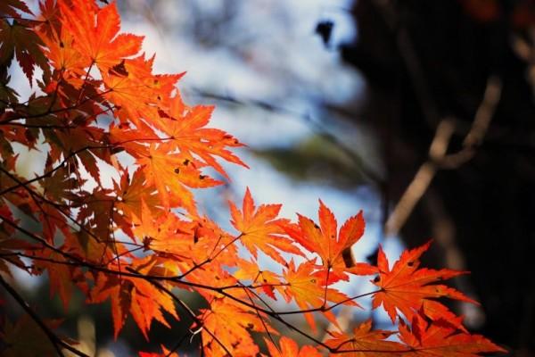 musica-autunno